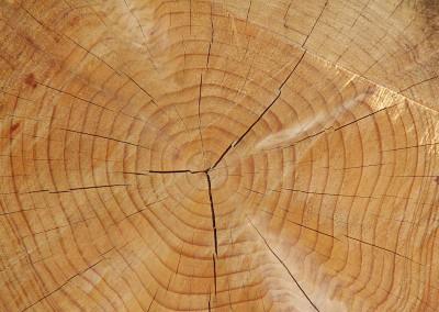 Bille de bois