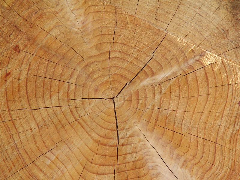 La passion du bois, le métier d'ébéniste